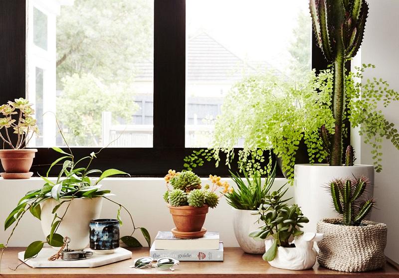擺好多個盆栽植物比空氣清淨機效果非常的好